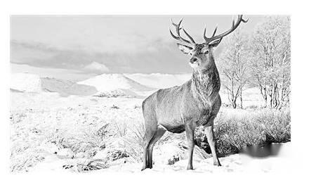 野生动物环保标语