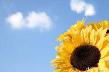 读《光明、太阳花》有感400字